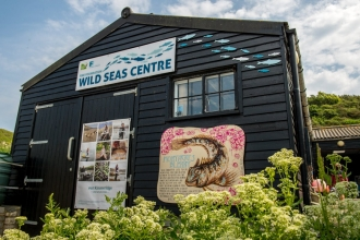 Wild Seas Centre Image by Phil Abraham