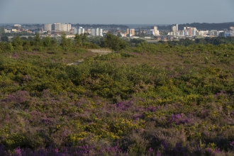 View to Poole from Upton Heath © Mark Heighes