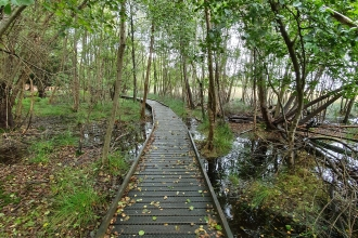 Boardwalk on Brownsea Island © Nicki Tutton