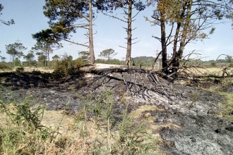 Fire Damage on Upton Heath by Luke Johns