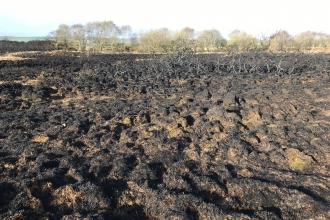Fire damage on Winfrith Heath nature reserve by Brian Bleese