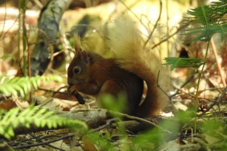Red squirrel by Luke Johns
