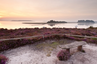 Looking at Brownsea © Ross Hoddinott/2020VISION
