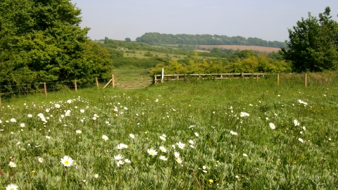 Lorton Meadows Nature Reserve by DWT