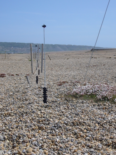 Fence barriers for the little tern colony on Chesil Beach © DWT